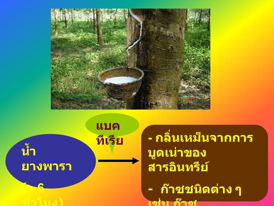 - กลิ่นเหม็นจากการ บูดเน่าของ สารอินทรีย์ - ก๊าซชนิดต่าง ๆ เช่น ก๊าซ คาร์บอนไดออกไซด์ ก๊าซมีเทน น้ำ ยางพารา (> 6 ชั่วโมง ) แบค ทีเรีย