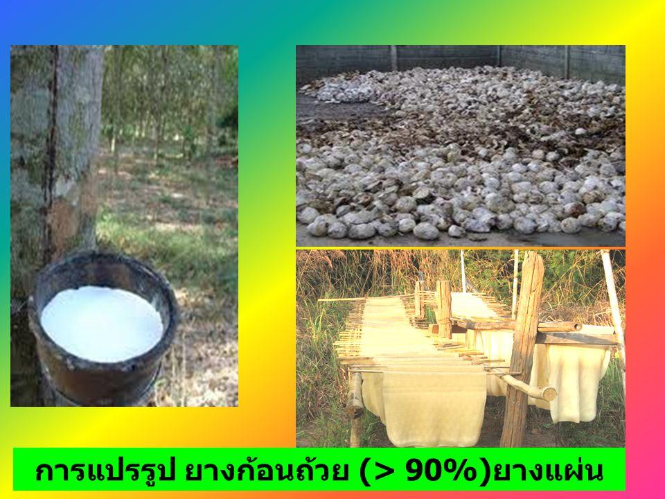 การแปรรูป ยางก้อนถ้วย (> 90%) ยางแผ่น