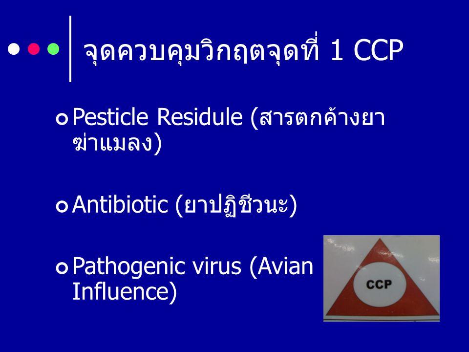 จุดควบคุมวิกฤตจุดที่ 1 CCP Pesticle Residule ( สารตกค้างยา ฆ่าแมลง ) Antibiotic ( ยาปฏิชีวนะ ) Pathogenic virus (Avian Influence)