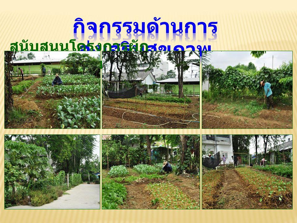 สนับสนุนโครงการผัก ปลอดสารพิษ