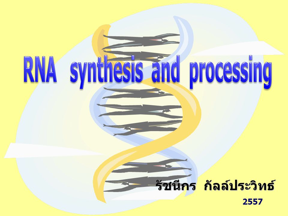 Gene : ส่วนของ DNA ที่ transcribe ไปเป็น RNA หรือ protein Central Dogma DNA RNA protein RNA synthesis (transcription) เป็นขั้นตอนแรกในการแสดงออกของยีน โดยการแปลรหัสจากเบสบนสาย DNA มาเป็นลำดับเบสของ RNA 2