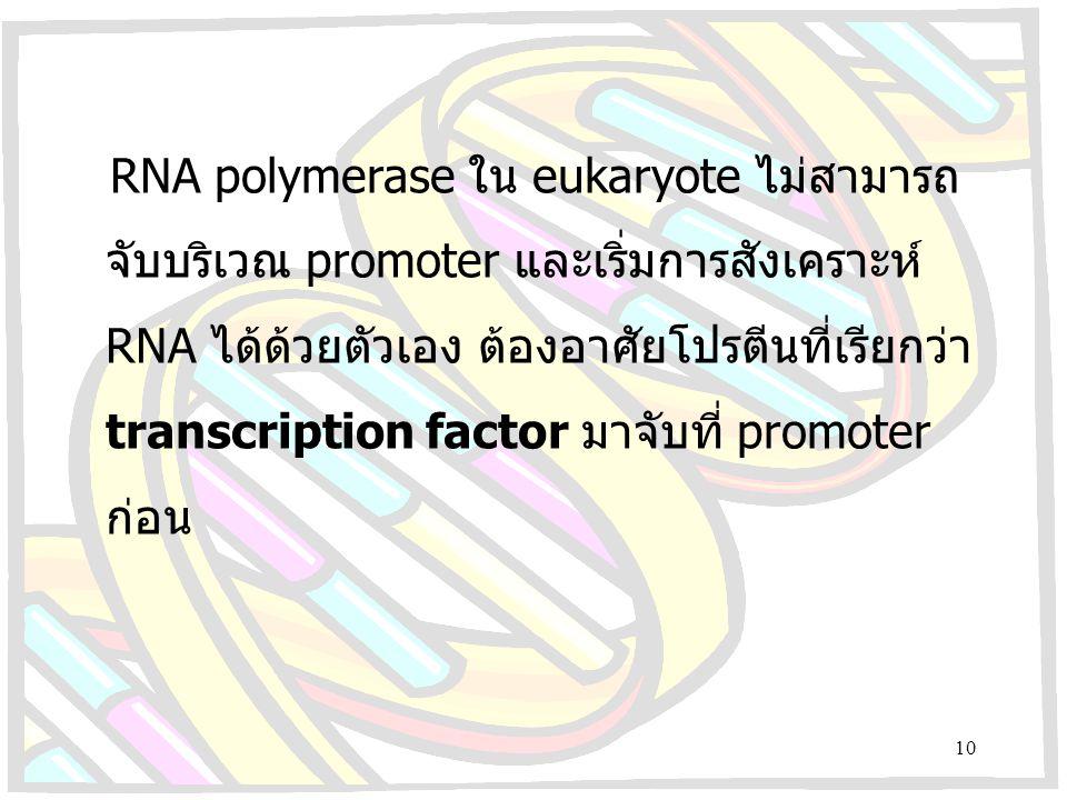 RNA polymerase ใน eukaryote ไม่สามารถ จับบริเวณ promoter และเริ่มการสังเคราะห์ RNA ได้ด้วยตัวเอง ต้องอาศัยโปรตีนที่เรียกว่า transcription factor มาจับ