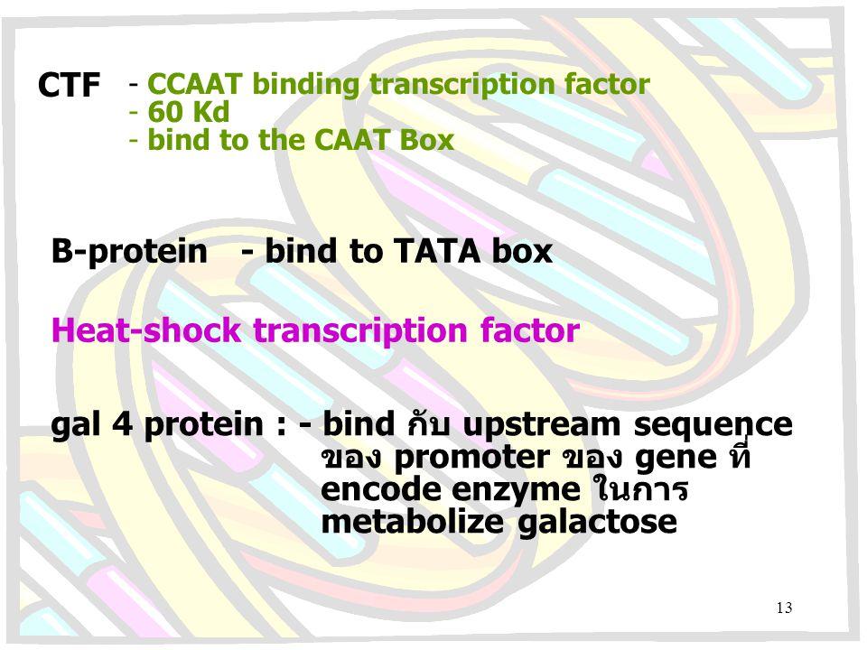 CTF - CCAAT binding transcription factor - 60 Kd - bind to the CAAT Box B-protein - bind to TATA box Heat-shock transcription factor gal 4 protein : -