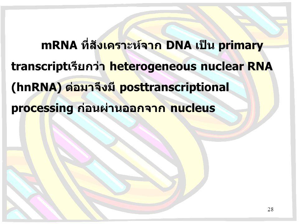 mRNA ที่สังเคราะห์จาก DNA เป็น primary transcriptเรียกว่า heterogeneous nuclear RNA (hnRNA) ต่อมาจึงมี posttranscriptional processing ก่อนผ่านออกจาก n