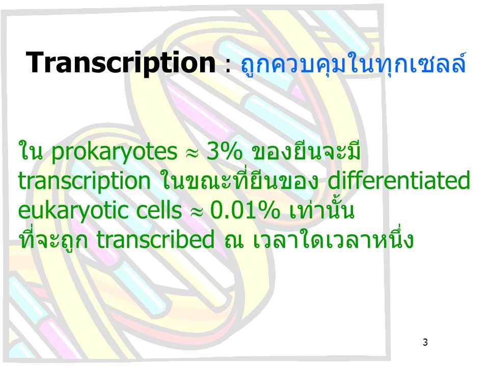 Transcription : ถูกควบคุมในทุกเซลล์ ใน prokaryotes  3% ของยีนจะมี transcription ในขณะที่ยีนของ differentiated eukaryotic cells  0.01% เท่านั้น ที่จะ