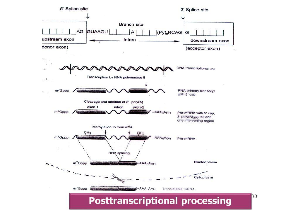 30 Posttranscriptional processing