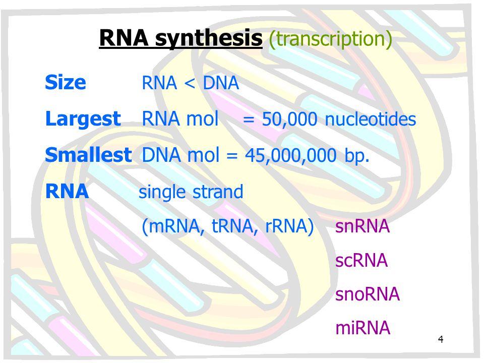 12543 hn RNA Constitutive Splicing 12345 AAAAAAA All splice sites used 12543 1245 AAAAAA Segment 3 deleted by Alternative Splicing 35