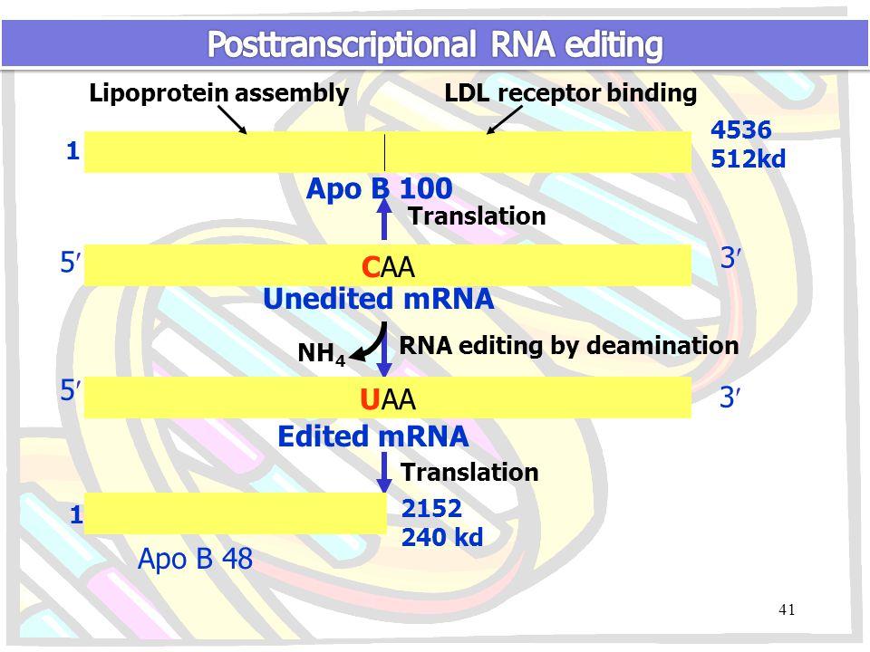 1 4536 512kd Lipoprotein assemblyLDL receptor binding Apo B 100 Translation CAA 5 3 Unedited mRNA NH 4 RNA editing by deamination UAA 5 3 Edited mRNA Translation 1 2152 240 kd Apo B 48 41