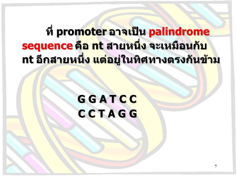 ที่ promoter อาจเป็น palindrome sequence คือ nt สายหนึ่ง จะเหมือนกับ nt อีกสายหนึ่ง แต่อยู่ในทิศทางตรงกันข้าม G G A T C C C C T A G G 7