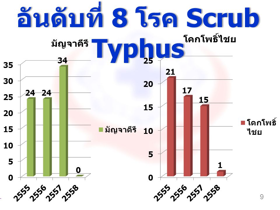 อันดับที่ 8 โรค Scrub Typhus 9