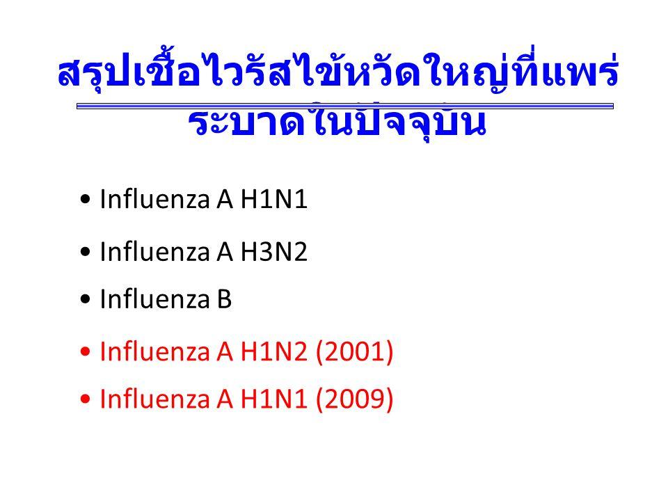 สรุปเชื้อไวรัสไข้หวัดใหญ่ที่แพร่ ระบาดในปัจจุบัน Influenza A H3N2 Influenza A H1N1 Influenza B Influenza A H1N2 (2001) Influenza A H1N1 (2009)