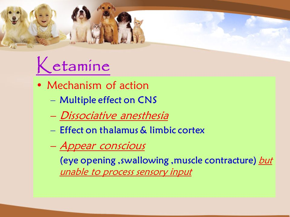 Mechanism of action –Multiple effect on CNS –Dissociative anesthesia –Effect on thalamus & limbic cortex –Appear conscious (eye opening,swallowing,muscle contracture) but unable to process sensory input Ketamine