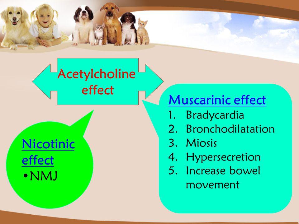 Acetylcholine effect Muscarinic effect 1.Bradycardia 2.Bronchodilatation 3.Miosis 4.Hypersecretion 5.Increase bowel movement Nicotinic effect NMJ