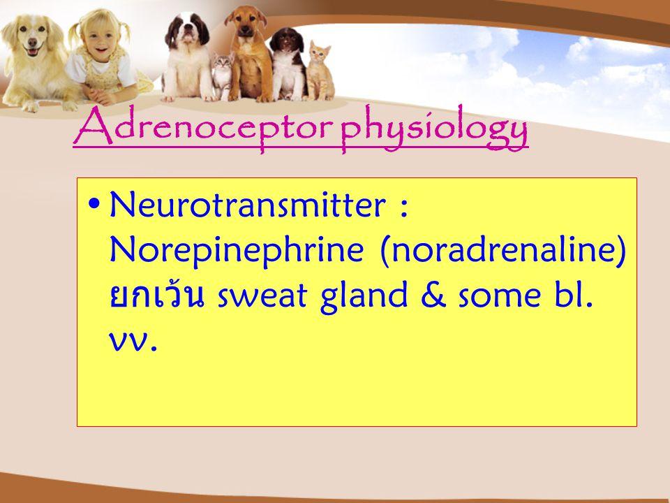 Adrenoceptor physiology Neurotransmitter : Norepinephrine (noradrenaline) ยกเว้น sweat gland & some bl.