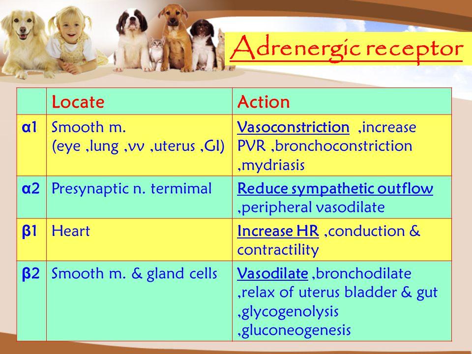 Adrenergic receptor LocateAction α1α1Smooth m. (eye,lung,vv,uterus,GI) Vasoconstriction,increase PVR,bronchoconstriction,mydriasis α2α2Presynaptic n.