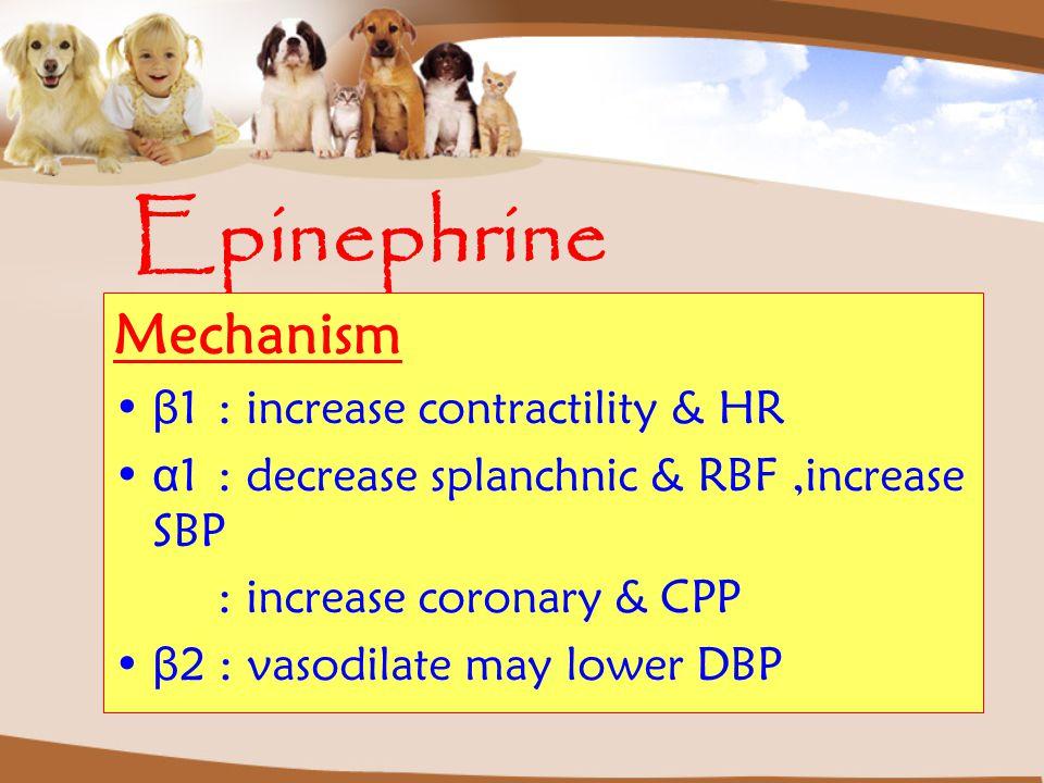 Epinephrine Mechanism β 1: increase contractility & HR α 1: decrease splanchnic & RBF,increase SBP : increase coronary & CPP β 2 : vasodilate may lowe
