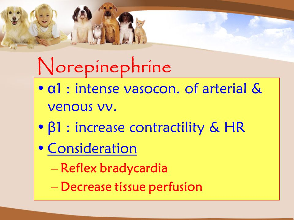 Norepinephrine α 1: intense vasocon. of arterial & venous vv. β 1: increase contractility & HR Consideration –Reflex bradycardia –Decrease tissue perf