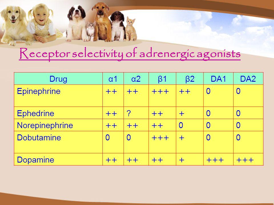 Receptor selectivity of adrenergic agonists Drugα1α1α2α2β1β1β2β2DA1DA2 Epinephrine++ +++++00 Ephedrine++? +00 Norepinephrine++ 000 Dobutamine00++++00