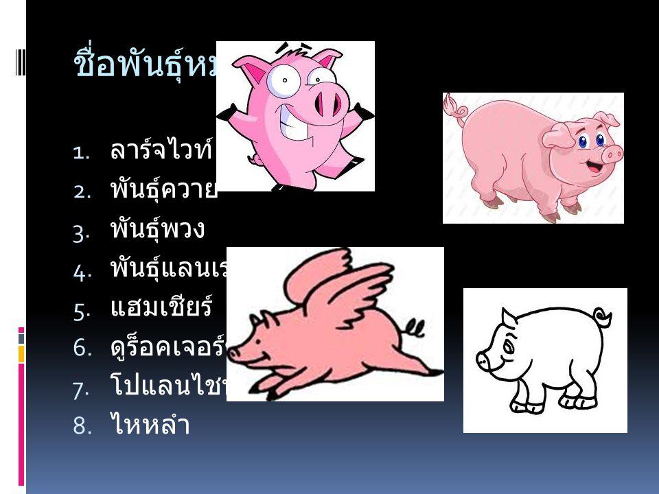  8 พันธุ์หมูที่ เลี้ยงง่าย