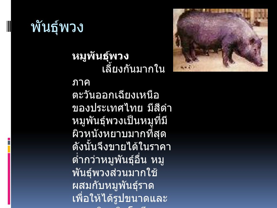 พันธุ์ควาย  พบเลี้ยงในภาคเหนือของประเทศไทย สีของ หมูพันธุ์นี้คล้ายสีของหมูพันธุ์ไหหลำ แต่ลำตัวมี สีดำเป็นส่วนใหญ่ จมูกของหมูพันธุ์ควายตรง กว่าและสั้น