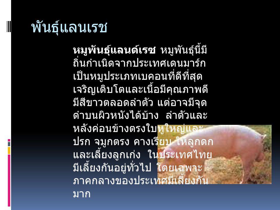 พันธุ์พวง หมูพันธุ์พวง เลี้ยงกันมากใน ภาค ตะวันออกเฉียงเหนือ ของประเทศไทย มีสีดำ หมูพันธุ์พวงเป็นหมูที่มี ผิวหนังหยาบมากที่สุด ดังนั้นจึงขายได้ในราคา