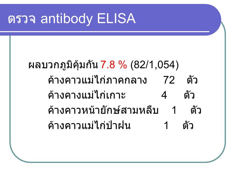 ตรวจ antibody ELISA ผลบวกภูมิคุ้มกัน 7.8 % (82/1,054) ค้างคาวแม่ไก่ภาคกลาง 72 ตัว ค้างคางแม่ไก่เกาะ 4 ตัว ค้างคาวหน้ายักษ์สามหลืบ 1 ตัว ค้างคาวแม่ไก่ป