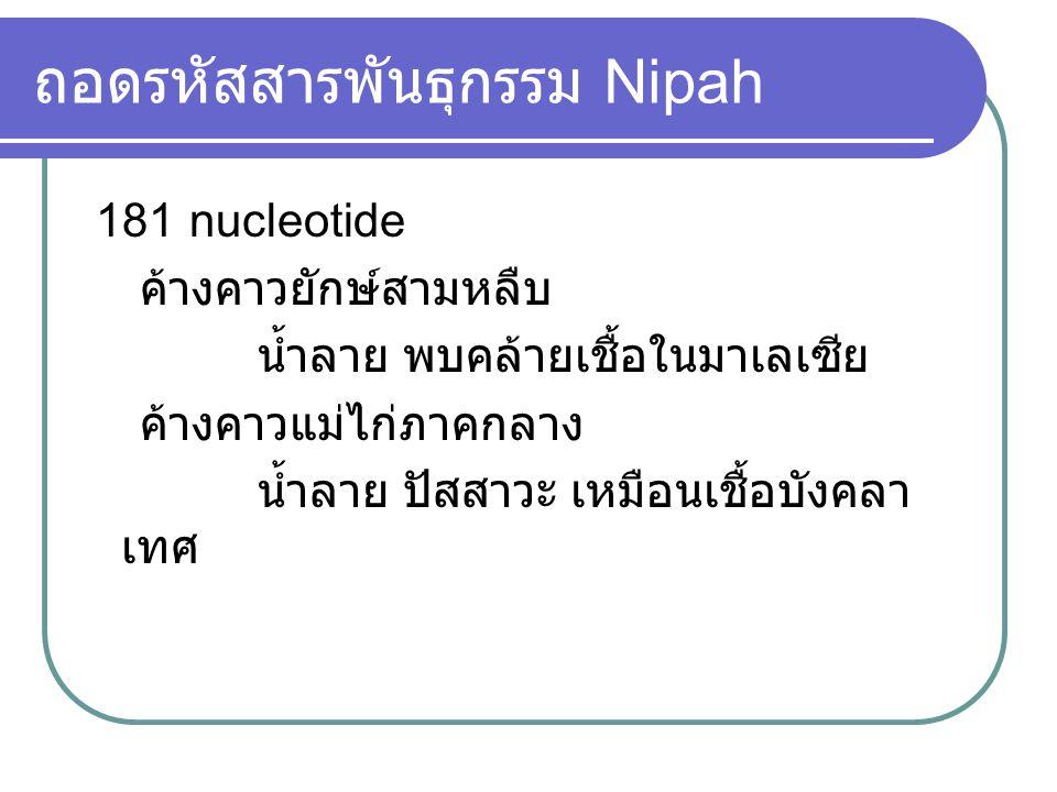 ถอดรหัสสารพันธุกรรม Nipah 181 nucleotide ค้างคาวยักษ์สามหลืบ น้ำลาย พบคล้ายเชื้อในมาเลเซีย ค้างคาวแม่ไก่ภาคกลาง น้ำลาย ปัสสาวะ เหมือนเชื้อบังคลา เทศ