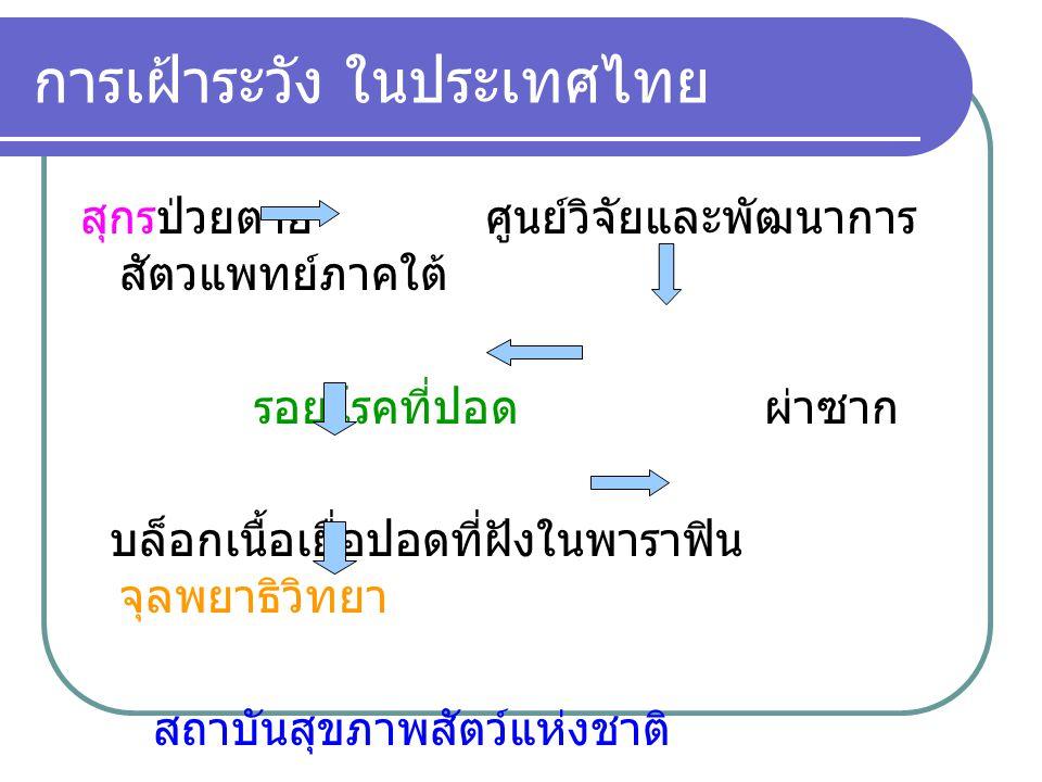 การเฝ้าระวัง ในประเทศไทย สุกรป่วยตาย ศูนย์วิจัยและพัฒนาการ สัตวแพทย์ภาคใต้ รอยโรคที่ปอด ผ่าซาก บล็อกเนื้อเยื่อปอดที่ฝังในพาราฟิน จุลพยาธิวิทยา สถาบันส