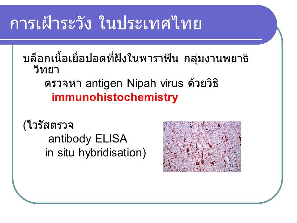 การเฝ้าระวัง ในประเทศไทย บล็อกเนื้อเยื่อปอดที่ฝังในพาราฟิน กลุ่มงานพยาธิ วิทยา ตรวจหา antigen Nipah virus ด้วยวิธี immunohistochemistry ( ไวรัสตรวจ an
