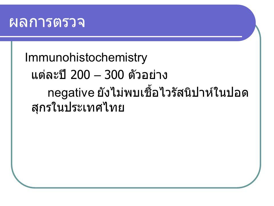 ผลการตรวจ Immunohistochemistry แต่ละปี 200 – 300 ตัวอย่าง negative ยังไม่พบเชื้อไวรัสนิปาห์ในปอด สุกรในประเทศไทย