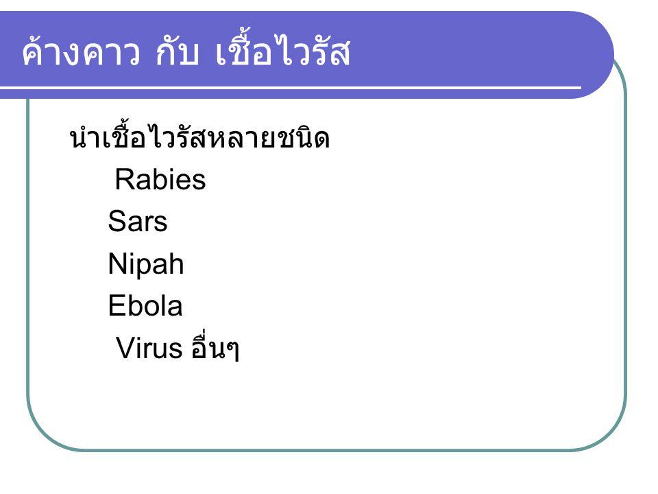 ค้างคาว กับ เชื้อไวรัส นำเชื้อไวรัสหลายชนิด Rabies Sars Nipah Ebola Virus อื่นๆ