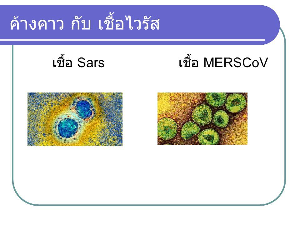 ค้างคาว กับ เชื้อไวรัส เชื้อ Sars เชื้อ MERSCoV