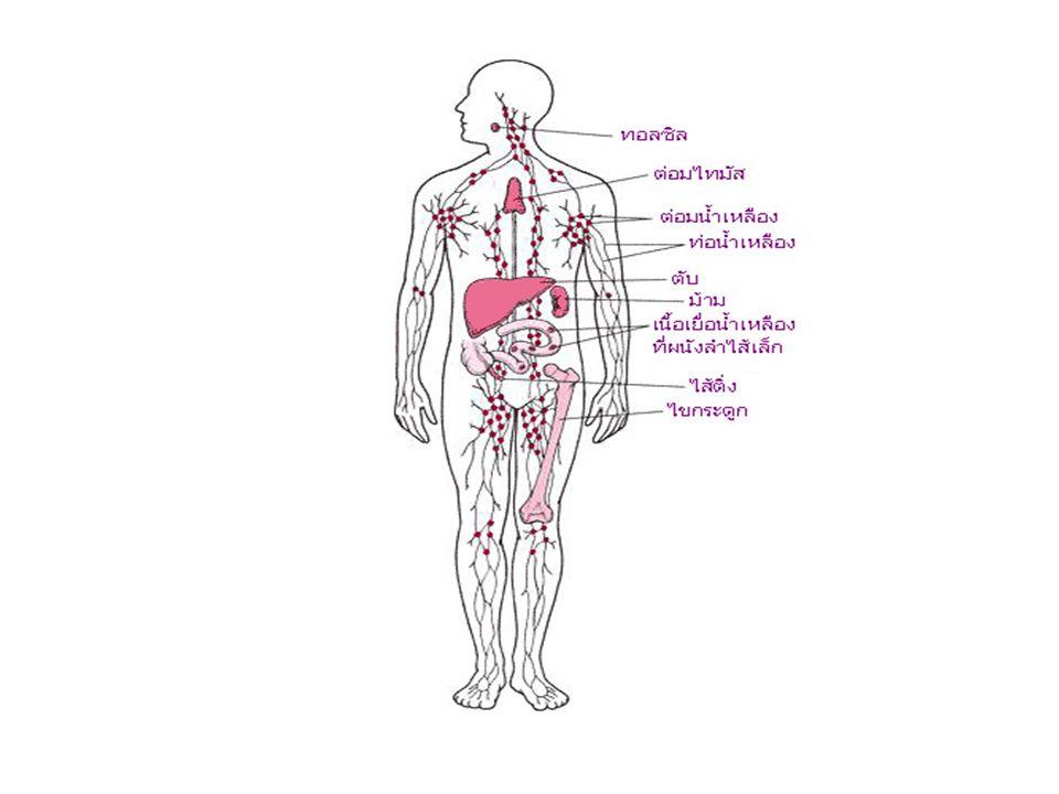 ระบบน้ำเหลือง (lymphatic system) จัดเป็นส่วนหนึ่งของระบบ หมุนเวียน (circulatory system) ในร่างกาย ประกอบด้วยท่อที่เชื่อมโยงกันเรียกว่า ท่อน้ำเหลือง (lymphatic vessels) ภายในบรรจุของเหลวใสที่ เรียกว่า น้ำเหลือง (lymph) โดยระบบน้ำเหลืองนั้น ไม่เป็นระบบปิด มีหน้าที่หลักคือนำของเหลวที่ซึม ออกมาจากหลอดเลือดฝอยกลับเข้าสู่หลอดเลือด ดำของระบบไหลเวียนcirculatory system น้ำเหลือง หน้าที่ของระบบน้ำเหลือง 1.