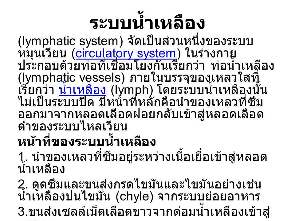 ระบบน้ำเหลือง (lymphatic system) จัดเป็นส่วนหนึ่งของระบบ หมุนเวียน (circulatory system) ในร่างกาย ประกอบด้วยท่อที่เชื่อมโยงกันเรียกว่า ท่อน้ำเหลือง (l