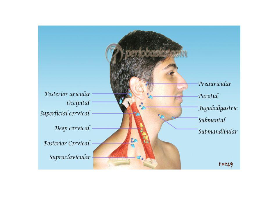 การตรวจเต้านม จะแบ่งเต้านมออกเป็น 4 ส่วน แต่ละส่วนเรียก quadrant โดยแบ่งตามเส้นแนวตั้งที่ลากตัดกับ แนวนอนที่หัวนม และเรียก quadrant เป็น upper inner (1) upper outer (2) lower inner (3) lower outer (4)