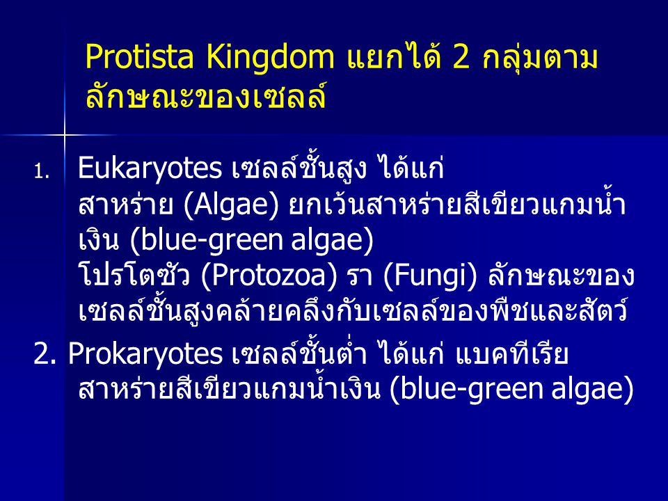 1. 1. Eukaryotes เซลล์ชั้นสูง ได้แก่ สาหร่าย (Algae) ยกเว้นสาหร่ายสีเขียวแกมน้ำ เงิน (blue-green algae) โปรโตซัว (Protozoa) รา (Fungi) ลักษณะของ เซลล์