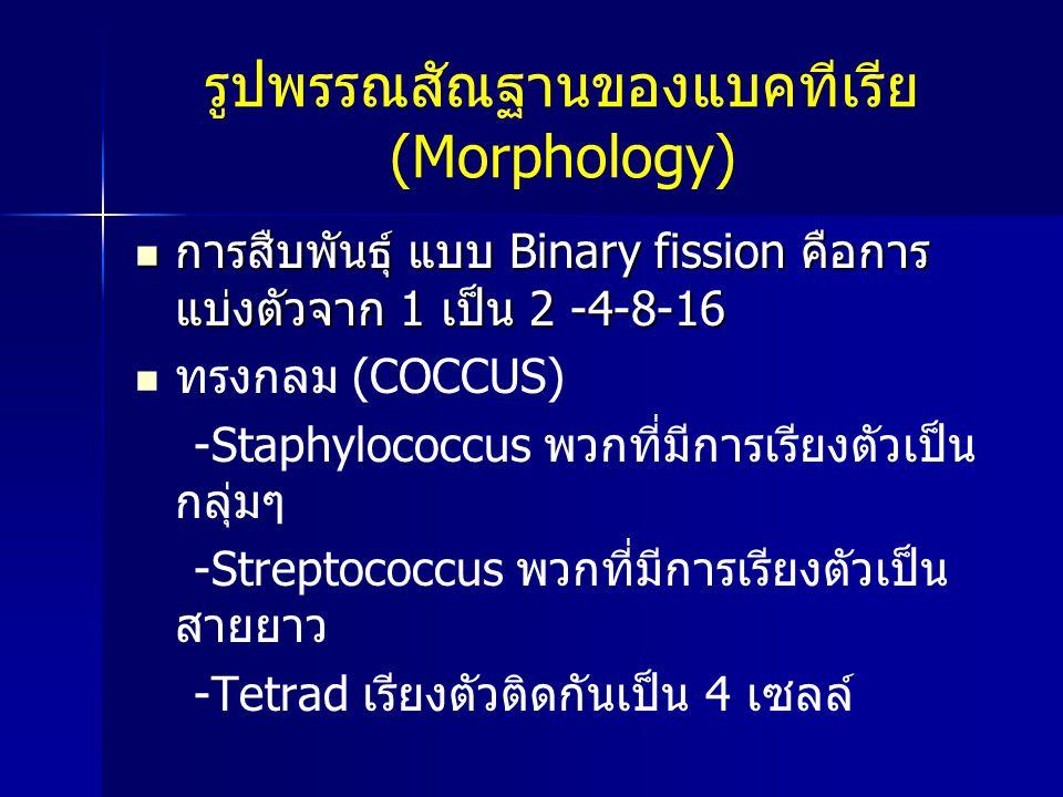 รูปพรรณสัณฐานของแบคทีเรีย (Morphology) การสืบพันธุ์ แบบ Binary fission คือการ แบ่งตัวจาก 1 เป็น 2 -4-8-16 การสืบพันธุ์ แบบ Binary fission คือการ แบ่งต