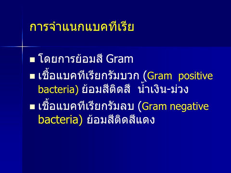การจำแนกแบคทีเรีย โดยการย้อมสี Gram เชื้อแบคทีเรียกรัมบวก ( Gram positive bacteria) ย้อมสีติดสี น้ำเงิน-ม่วง เชื้อแบคทีเรียกรัมลบ ( Gram negative bact