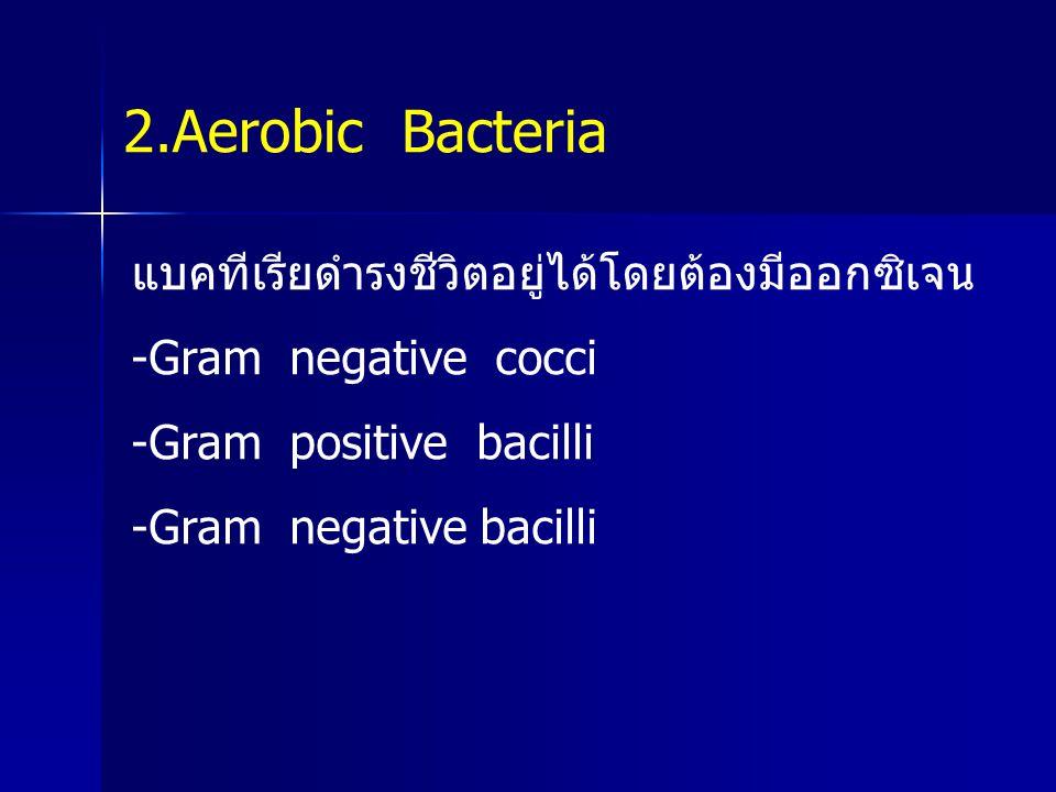 2.Aerobic Bacteria แบคทีเรียดำรงชีวิตอยู่ได้โดยต้องมีออกซิเจน -Gram negative cocci -Gram positive bacilli -Gram negative bacilli