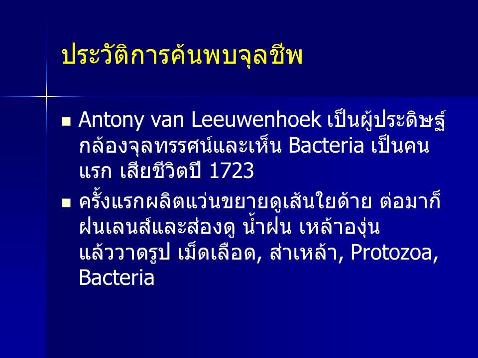 ประวัติการค้นพบจุลชีพ Antony van Leeuwenhoek เป็นผู้ประดิษฐ์ กล้องจุลทรรศน์และเห็น Bacteria เป็นคน แรก เสียชีวิตปี 1723 ครั้งแรกผลิตแว่นขยายดูเส้นใยด้
