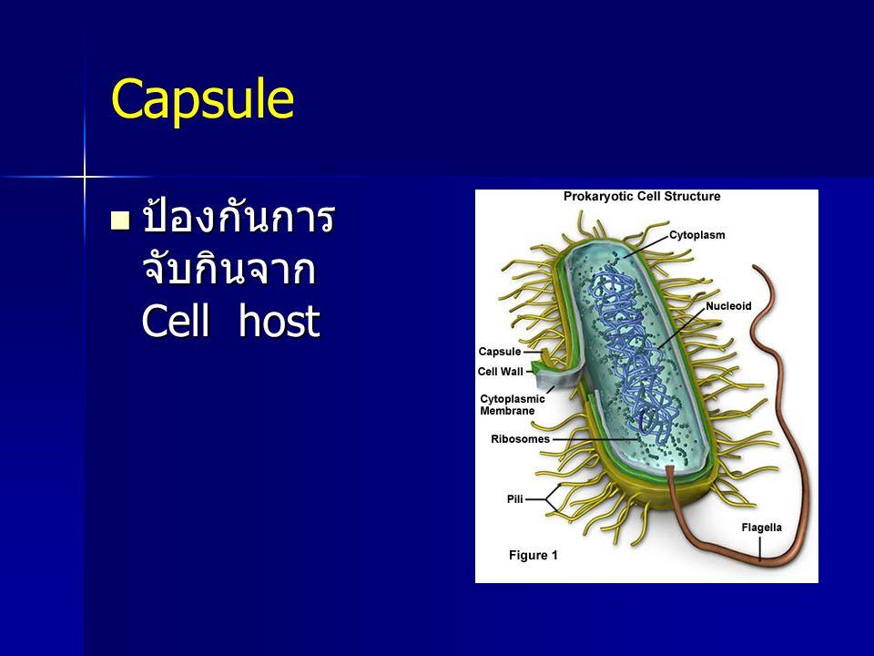 Capsule ป้องกันการ จับกินจาก Cell host ป้องกันการ จับกินจาก Cell host