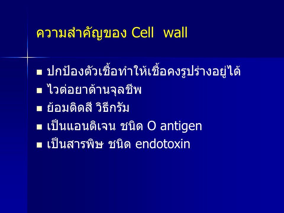 ความสำคัญของ Cell wall ปกป้องตัวเชื้อทำให้เชื้อคงรูปร่างอยู่ได้ ไวต่อยาต้านจุลชีพ ย้อมติดสี วิธีกรัม เป็นแอนติเจน ชนิด O antigen เป็นสารพิษ ชนิด endot