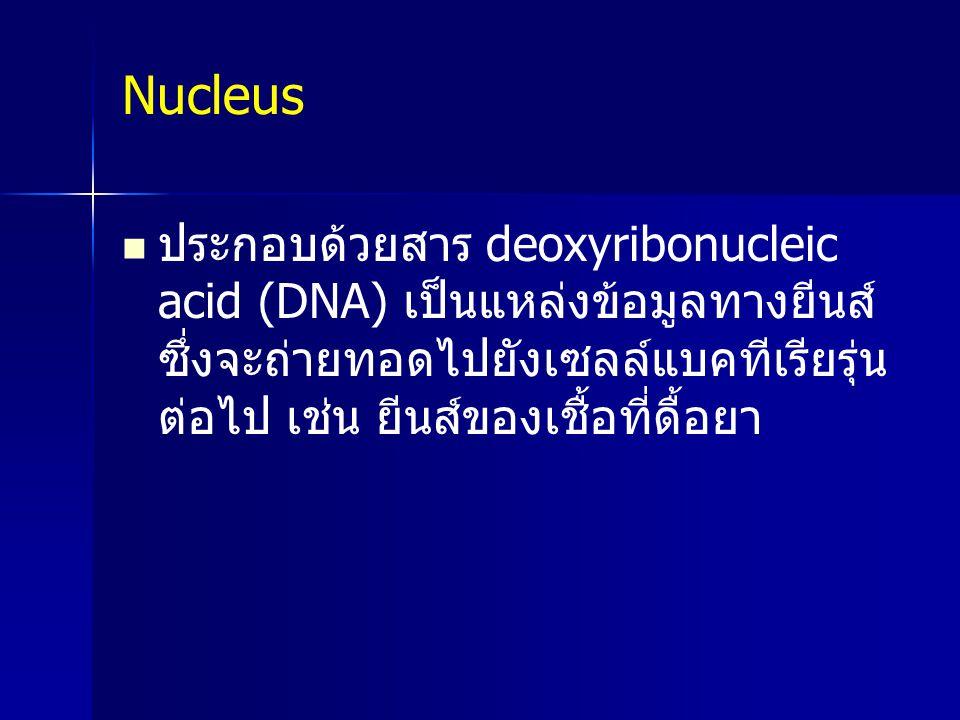 Nucleus ประกอบด้วยสาร deoxyribonucleic acid (DNA) เป็นแหล่งข้อมูลทางยีนส์ ซึ่งจะถ่ายทอดไปยังเซลล์แบคทีเรียรุ่น ต่อไป เช่น ยีนส์ของเชื้อที่ดื้อยา