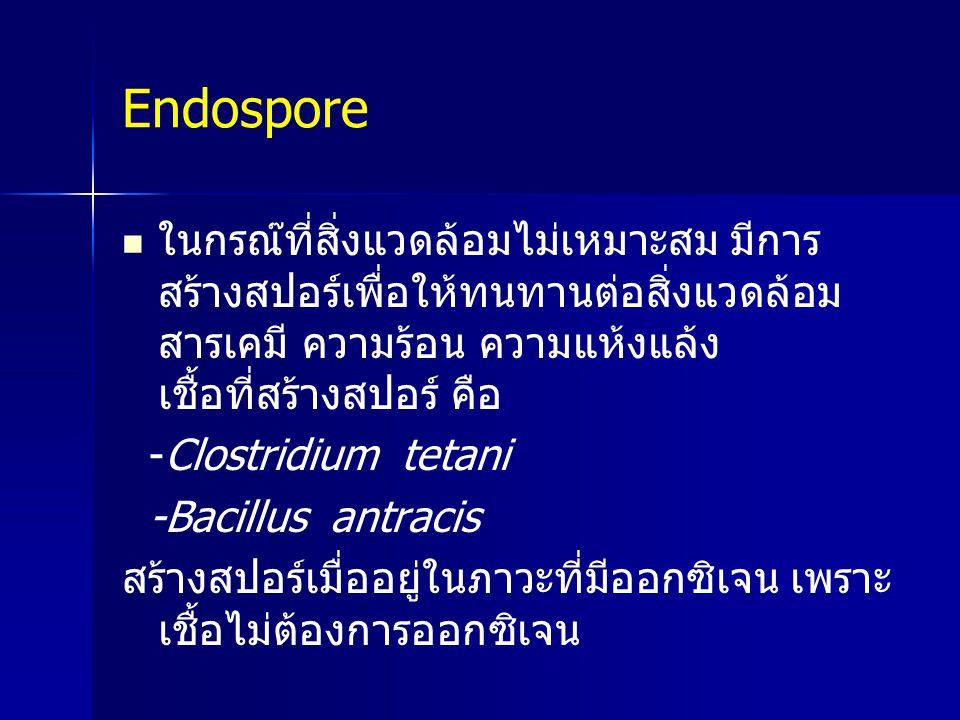 Endospore ในกรณ๊ที่สิ่งแวดล้อมไม่เหมาะสม มีการ สร้างสปอร์เพื่อให้ทนทานต่อสิ่งแวดล้อม สารเคมี ความร้อน ความแห้งแล้ง เชื้อที่สร้างสปอร์ คือ -Clostridium
