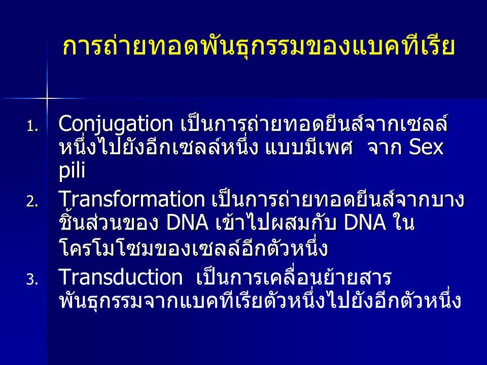 การถ่ายทอดพันธุกรรมของแบคทีเรีย 1. Conjugation เป็นการถ่ายทอดยีนส์จากเซลล์ หนึ่งไปยังอีกเซลล์หนึ่ง แบบมีเพศ จาก Sex pili 2. Transformation เป็นการถ่าย
