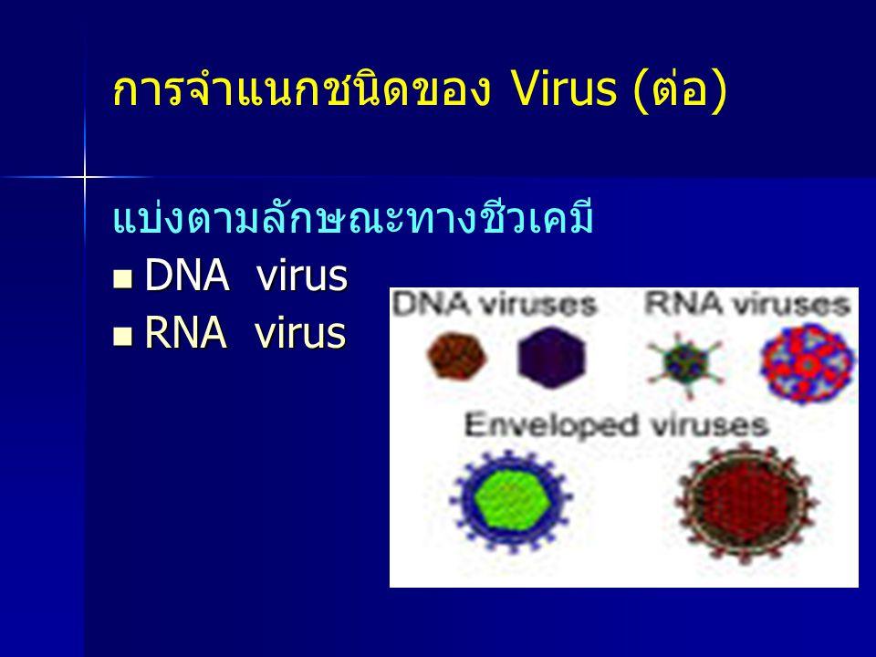 แบ่งตามลักษณะทางชีวเคมี DNA virus DNA virus RNA virus RNA virus การจำแนกชนิดของ Virus (ต่อ)