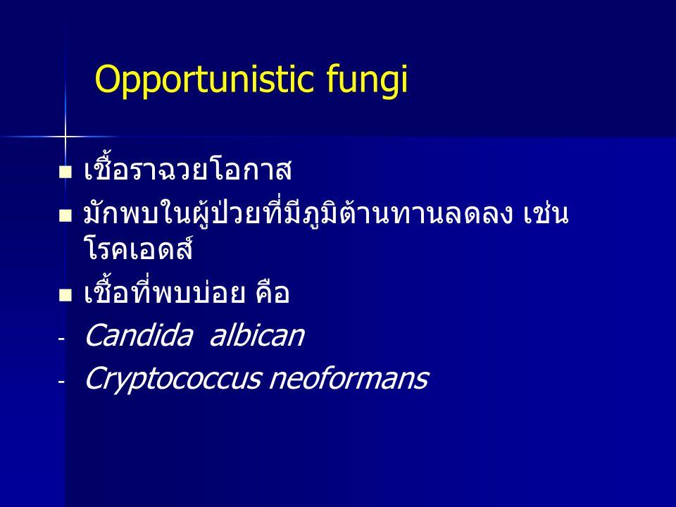 เชื้อราฉวยโอกาส มักพบในผู้ป่วยที่มีภูมิต้านทานลดลง เช่น โรคเอดส์ เชื้อที่พบบ่อย คือ - - Candida albican - - Cryptococcus neoformans Opportunistic fung
