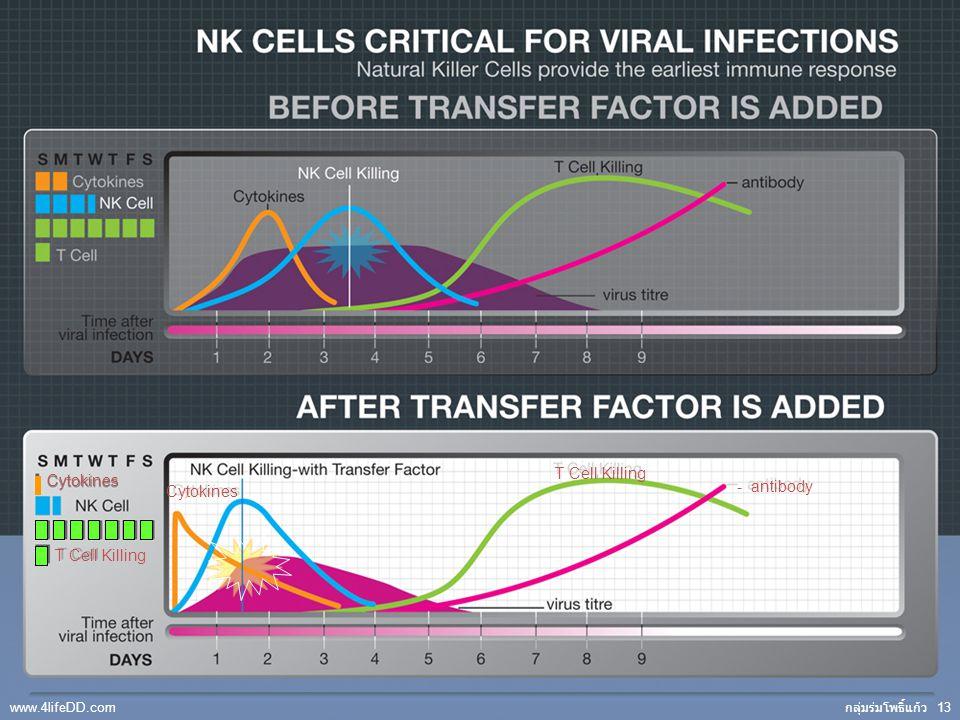 11 T Cell Killing Cytokines - antibody Cytokines กลุ่มร่มโพธิ์แก้ว 13 www.4lifeDD.com
