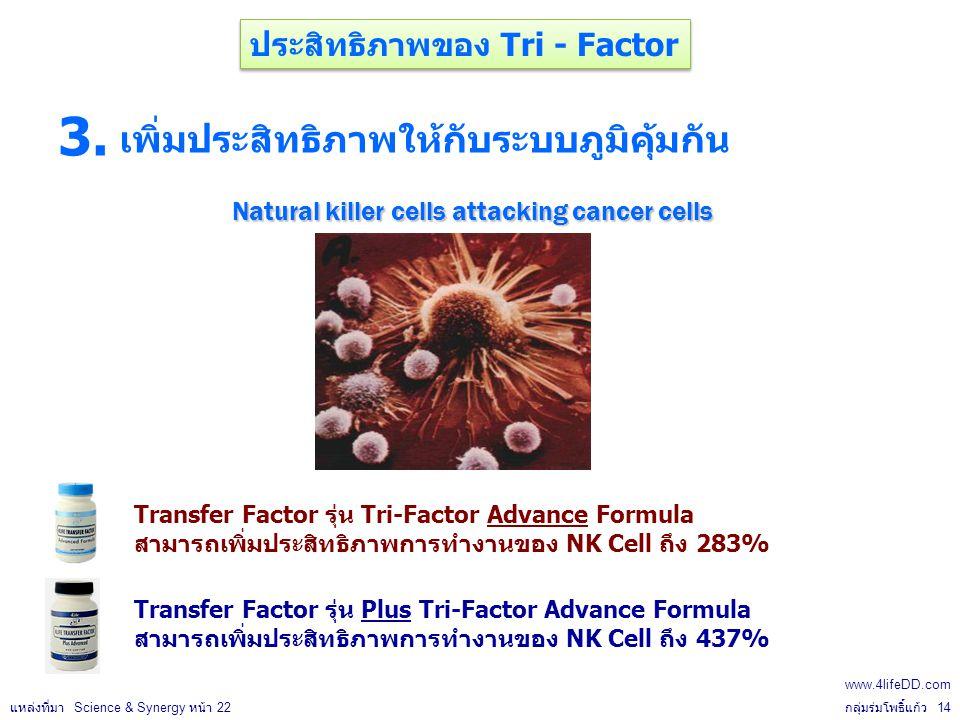 เพิ่มประสิทธิภาพให้กับระบบภูมิคุ้มกัน Natural killer cells attacking cancer cells 3.