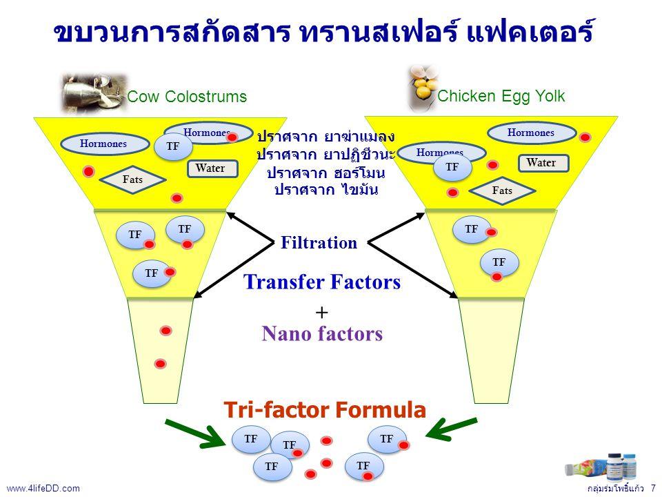 Hormones ขบวนการสกัดสาร ทรานสเฟอร์ แฟคเตอร์ Transfer Factors Nano factors Hormones Water Fats TF Hormones Water Fats TF Tri-factor Formula + Filtration Chicken Egg Yolk Cow Colostrums TF ปราศจาก ยาฆ่าแมลง ปราศจาก ยาปฏิชีวนะ ปราศจาก ฮอร์โมน ปราศจาก ไขมัน กลุ่มร่มโพธิ์แก้ว 7 www.4lifeDD.com